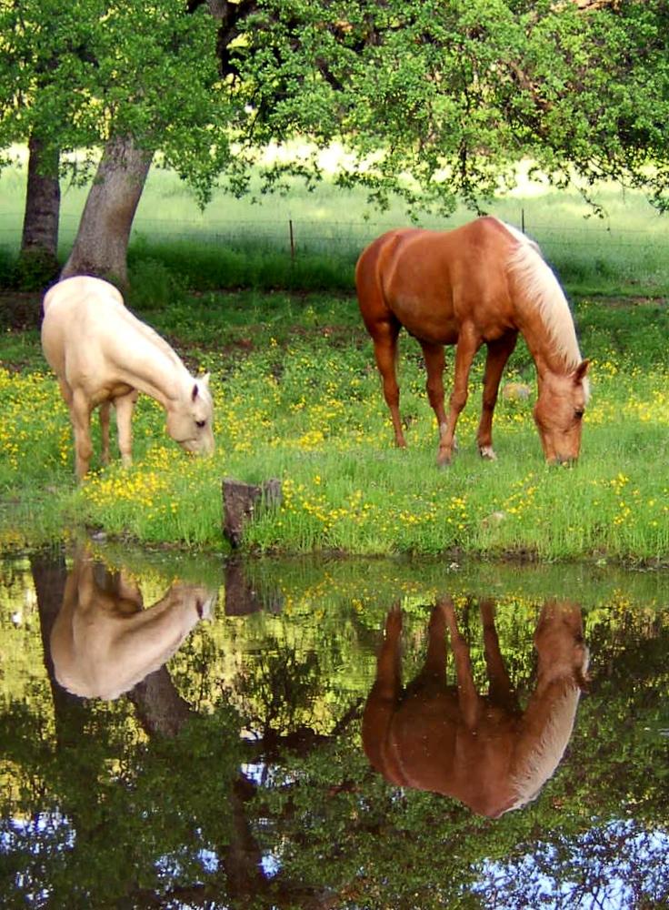 yosemite-horses.jpg