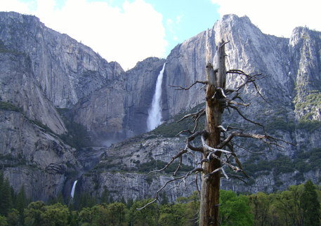 yosemitefallstree1.png