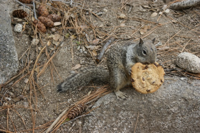 The EVIL Squirrel that STOLE my Cookie!