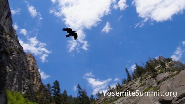YosemiteSummit2017 - 73_ys